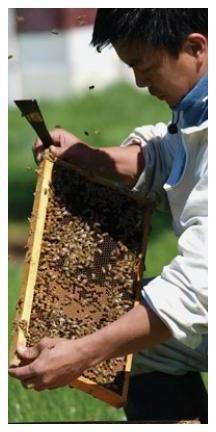 2016 Honey Bees Watson Son3