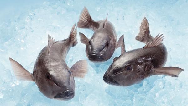 Ngai Tahu Seafood Blue Cod